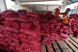Hibah Bawang Merah Sitaan