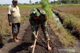 TNI bantu petani Belitung tanami padi 10 hektare