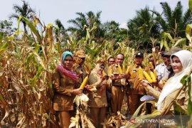 Dinas pertanian Tapsel - BPS lakukan pengubinan produksi jagung