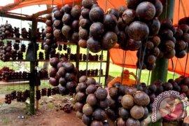 Virus corona merebak, ekspor manggis Bengkulu terganggu