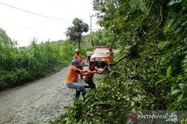 Angin Kencang Robohkan Pepohonan di Pamekasan