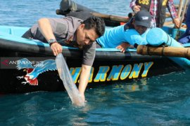 Pemerintah gagalkan penyelundupan benih lobster senilai Rp8,75 miliar