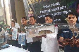 Polda Jatim ungkap perdagangan puluhan satwa dilindungi (Video)