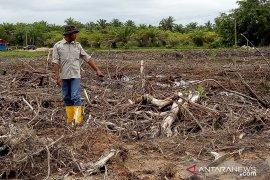 Alih fungsi hutan mangrove kembali terjadi, pelaku harus ditindak