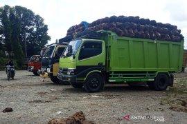 Harga sawit di Aceh Barat naik jadi Rp1.220 per kilogram