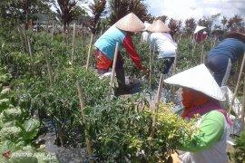 Harga jual sayuran di Rejang Lebong rendah