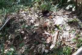 Sekawanan monyet diduga serang warga Wampu, korban meninggal dunia