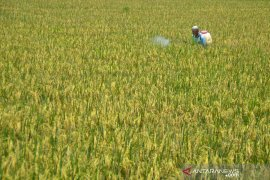 Purwakarta perluas areal pengembangan pertanian organik