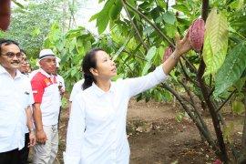 Banyuwangi dan dua perusahaan BUMN kolaborasi kembangkan wisata cokelat