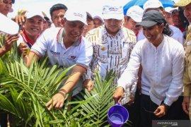 PTPN V beri insentif petani Riau untuk dongkrak harga karet.
