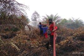 BPBA: baru 60 persen kebakaran lahan sawit  yang padam di Aceh Selatan