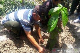 Polbangtan berikan contoh pembibitan sawit dan budidaya kakao kepada petani