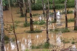 Ratusan  hektare kebun karet terendam banjir  Page 1 Small
