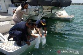 Polairud Polda Bali lepasliarkan 2.038 benih lobster