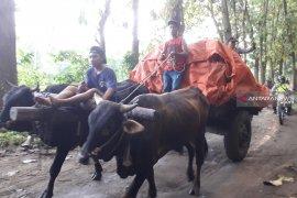 KPU Jember tuntaskan distribusi logistik di sejumlah TPS rawan