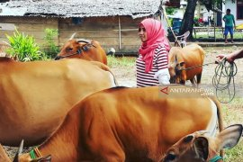 """Keinginan """"Kartini"""" di Gorontalo Utara Meningkatkan Sektor Peternakan"""