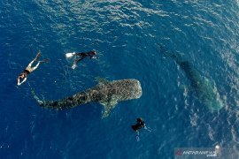 Warga Bone Bolango apresiasi pariwisata hiu paus Botubarani dipaparkan di Australia