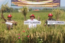 Petani Tulungagung gelar syukuran panen raya padi