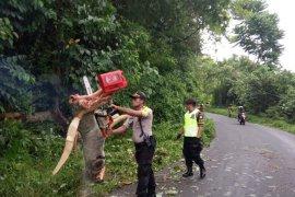 Dua pengendara motor terluka diterjang pohon tumbang