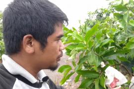 Berita Vlog: Melihat Kebun Jambu Air Super Manis di Kalbar