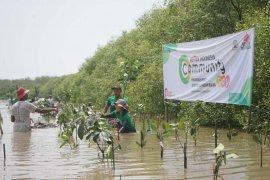 PT Semen Indonesia tanam 1.000 mangrove di Gresik.