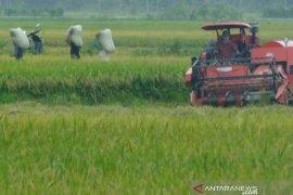 Ongkos panen padi di Abdya Turun