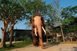 6 ekor gajah mati setelah jatuh ke air terjun
