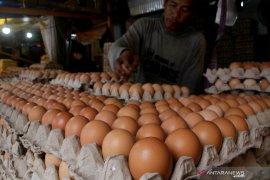 Kota Bandung tekan harga ayam dan telur lewat kerjasama peternak
