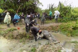 Balai TNUK Pandeglang belum pastikan kematian Badak Jawa