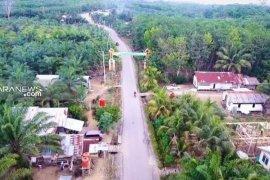 Belasan ribu hektare kelapa sawit di Kabupaten Paser diremajakan