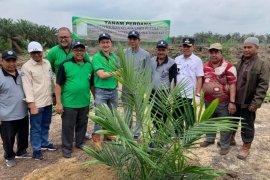 PT BBB lakukan peremajaan perdana kebun kelapa sawit plasma