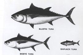 KKP-Asosiasi Perikanan promosikan industri  tuna berkelanjutan