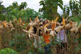 Perhutani Saradan genjot pendapatan dari hasil bukan kayu