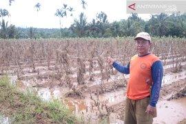 Petani terdampak banjir Kepahiang belum menerima bantuan