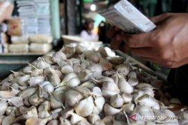 Harga bawang putih meroket di Sangatta -