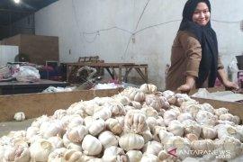 Harga bawang putih di Samarinda turun