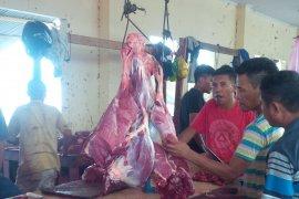 Harga daging sapi di Malut stabil