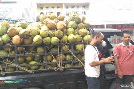 Penyuplai kelapa muda  kewalahan di awal Ramadhan