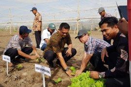 PTPN X targetkan areal tanam tembakau 510 hektare