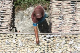 Permintaan ikan asin di Aceh Barat  meningkat