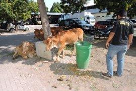 Polres Situbondo tembak enam pencuri sapi