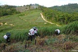 Satu hektare lahan serai wangi bisa produksi minyak 200 Kg