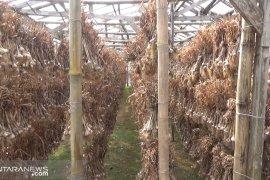 Disperindag Jawa Barat optimalkan pasokan bawang putih lokal