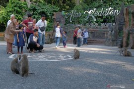 Lebaran, kunjungan wisatawan ke Hutan Monyet Alas Kedaton Tabanan meningkat (video)
