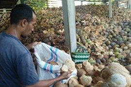 Lebaran, permintaan kelapa dari Desa Sulang Klungkung meningkat