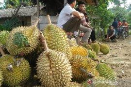 Pesisir Selatan kembangkan desa pariwisata berbasis padi dan durian