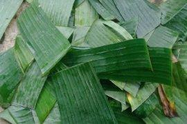 Mahasiswa Unimed  membuat anti air dari daun pisang