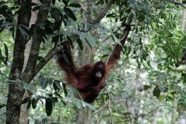 Forest degradation threatens flora, fauna: LIPI