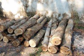 Polres Blitar tangani kasus pencurian kayu