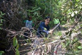 Hutan Rimbang Baling dijaga pengawal adat Dubalang